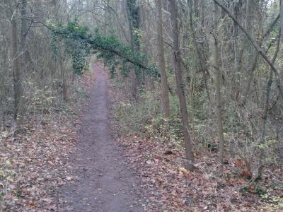 Mainz für Waldliebhaber